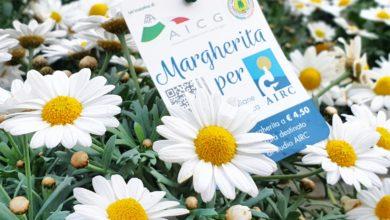 Photo of MASSA – Margherita per AIRC, dal 6 marzo al 25 aprile nei Centri di Giardinaggio Aicg