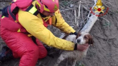 Photo of GROSSETO – Cane cade nel fiume Ombrone, salvo grazie ai Vigili del Fuoco