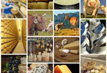 Photo of Coronavirus, Confagricoltura: latte e formaggi produzioni di eccellenza, sosteniamo la filiera e condanniamo speculazioni