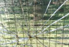 """Photo of Litorale Pisano: """"Atti vandalici al campo sportivo"""""""