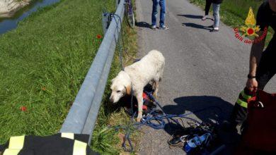 Photo of PRATO- Salvataggio di due cani caduti nel torrente
