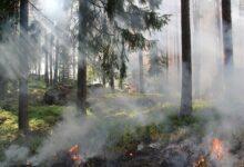 Photo of Toscana: 200 roghi boschivi tra gennaio e agosto
