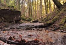 """Photo of CASENTINO – Parco nazionale e associazione """"La grande via"""" insieme per verificare i benefici delle foreste sulla salute dell'uomo"""