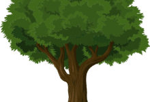 tree 576847 1280