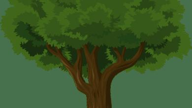 Photo of LUCCA – Saranno abbattuti cinque alberi a San Concordio