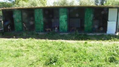sequestro cani lucca