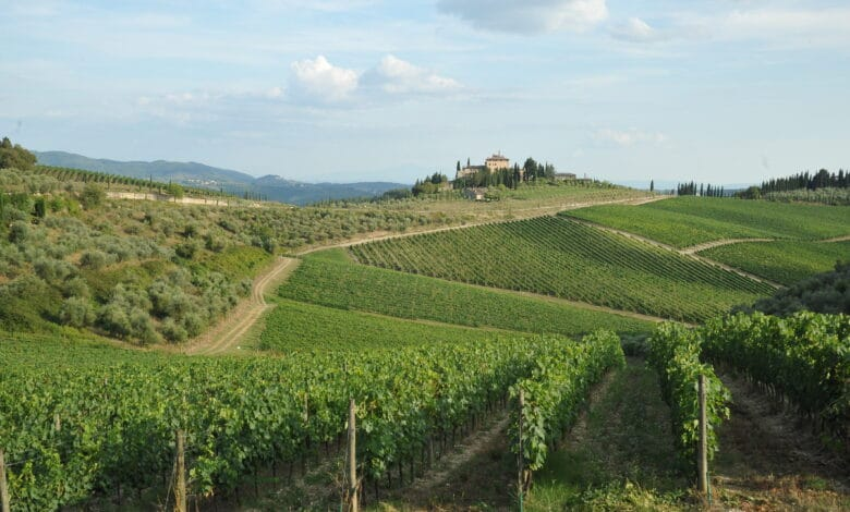 Chianti Classico Landscape S. Don. Pe.
